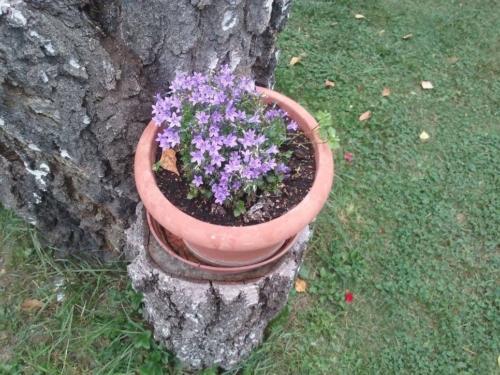 Zahrada 13